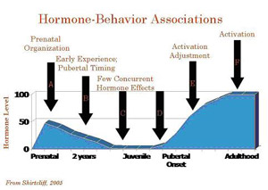 Hormones make safer drivers